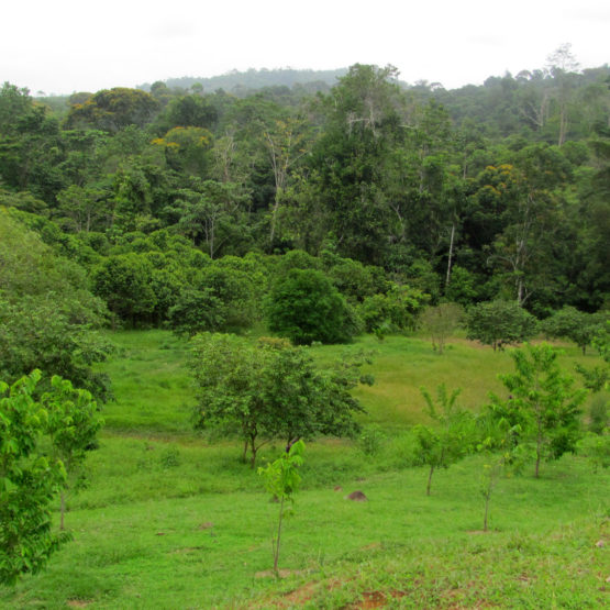 Costa Rica Properties for Sale - Lot 77