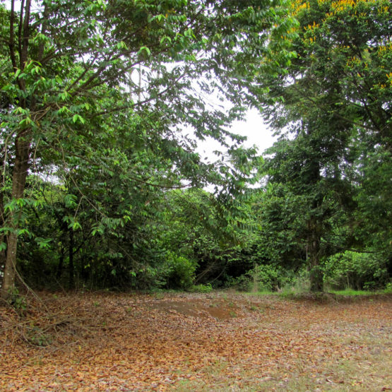 Costa Rica Properties for Sale - Lot 3, 3a