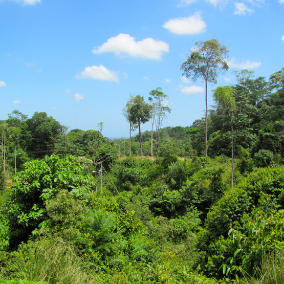 Costa Rica Properties for Sale with Caribbean Views