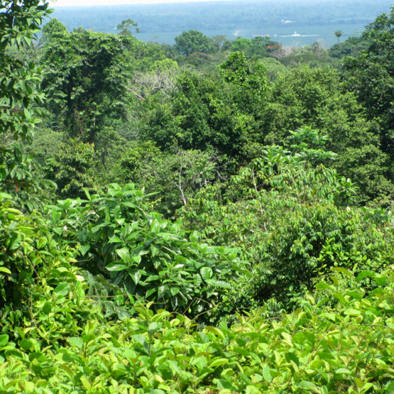 Lot 10 Properties for Sale in Costa Rica